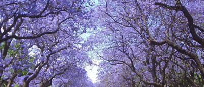 Purple tunnel in Johannesburg; streets of Johannesburg;